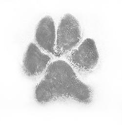 Inked Paw Print